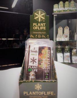 graines cannabis cbd feminisees flower town lyon